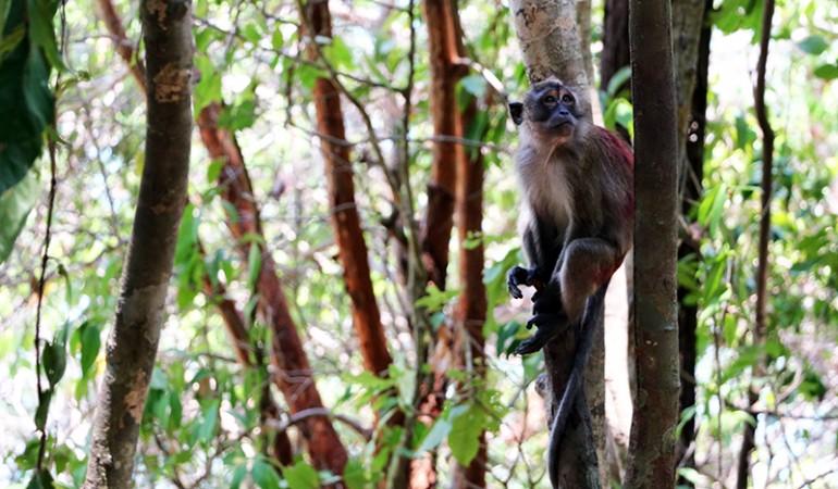 Mu Nationalpark på Koh Lanta