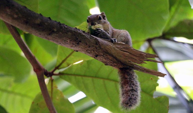 Sri Lankas vilde dyr