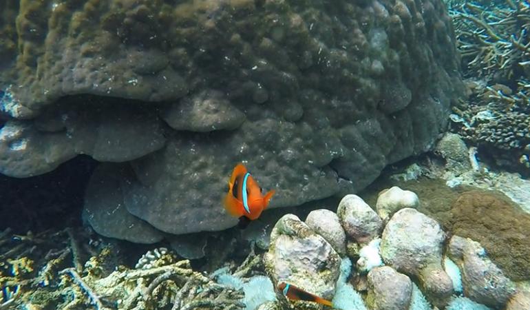 Snorkling på Bali