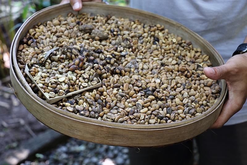 kaffeplantage-2