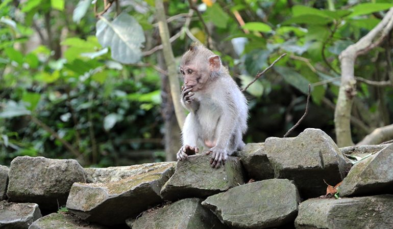 Monkey Forest i Ubud