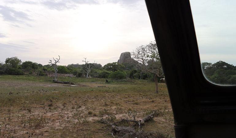 Bagsiden af safari
