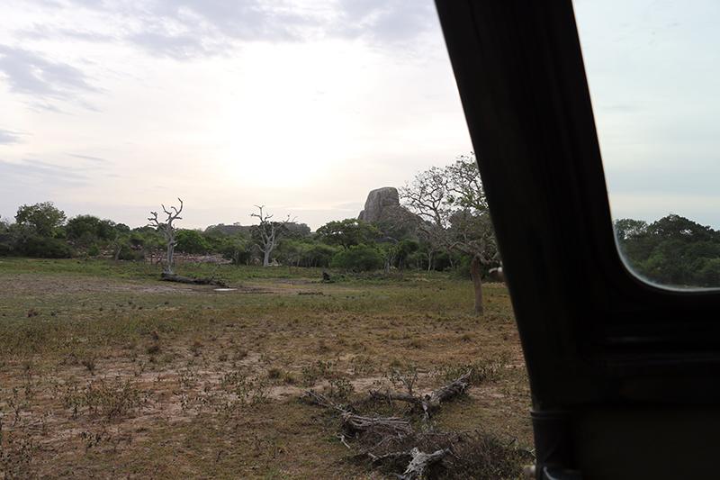 safari-bagsiden