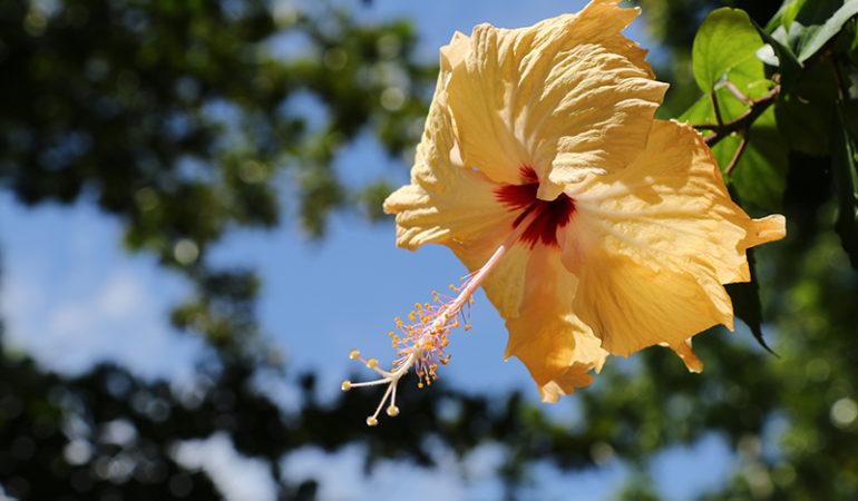 Sri Lankas skønne natur