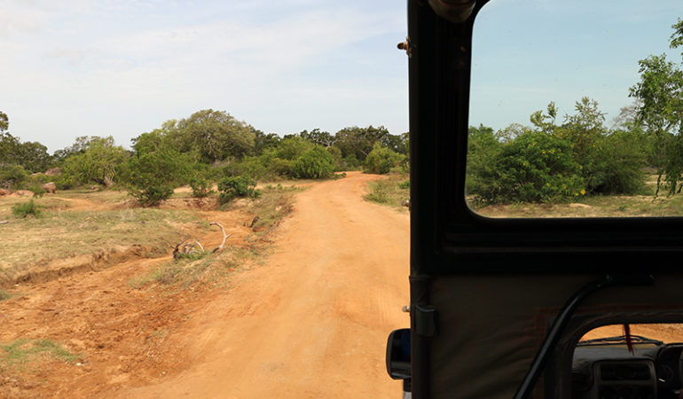 Safari i Yala National Park